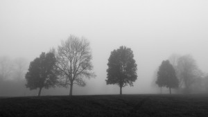 horfield common fog 7