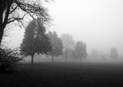Autumnal foggy day on the common