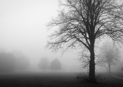 Trees by a house on a foggy day
