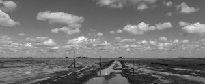 Contact Page - Essex marshland