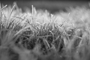 Close up of frosted grass - February