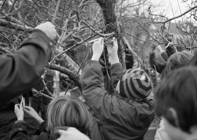 Wassail tree with child tying a ribbon