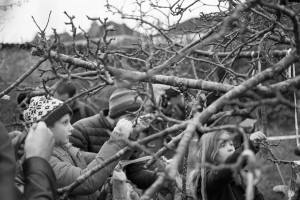 Wassail tree looking for branches to tie ribbons
