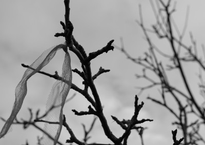 Ribbon tied high on the Wassail tree