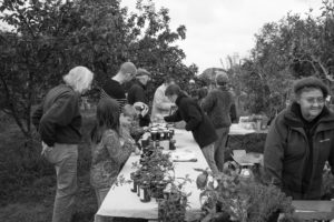 Apple Day produce stall Autumn gallery header image
