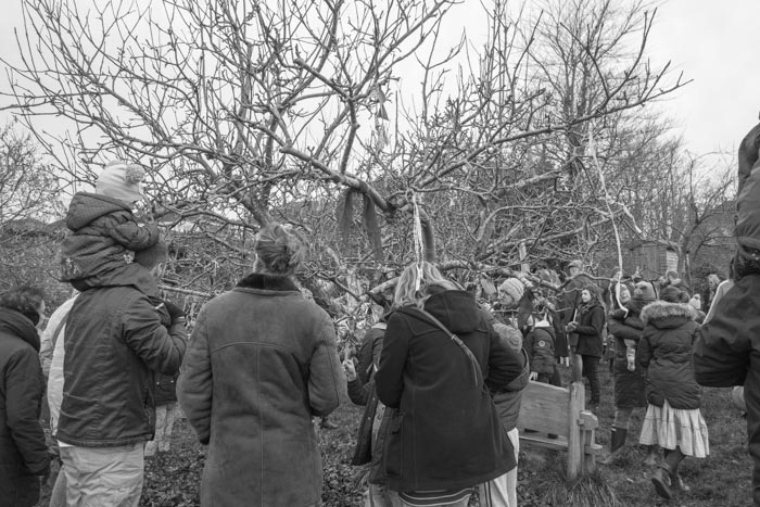 Horfield Wassail - gathering around the tree