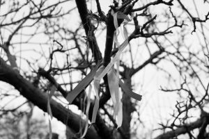Wassail- ribbons in the tree
