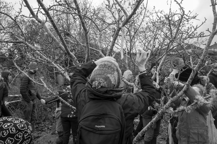 Tying ribbons on the Wassail tree - 2019